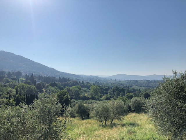 A view of the green, forested valley nearby Fiesole, in Tuscany.